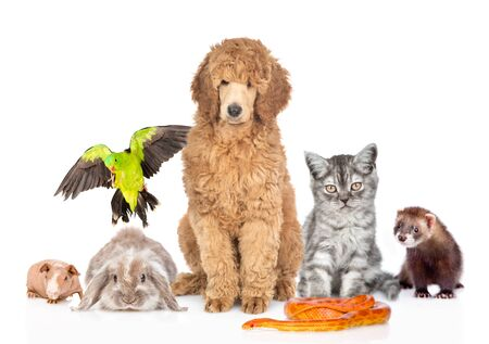 Large group of pets together in front view. Isolated on white background.の写真素材