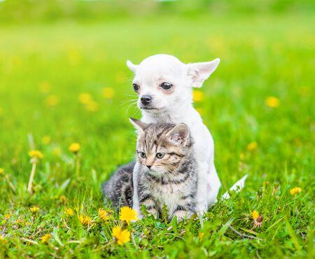 Photo pour Chihuahua puppy hugging kitten on a dandelion field. - image libre de droit