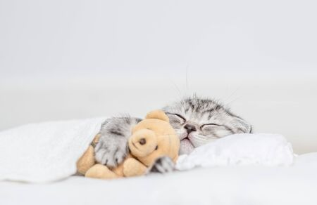 Photo pour Tabby kitten sleeping with toy bear on pillow under blanket. - image libre de droit