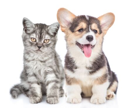 Photo pour Welsh corgi puppy with open mouth sits with tabby kitten and looking at camera. isolated on white background. - image libre de droit