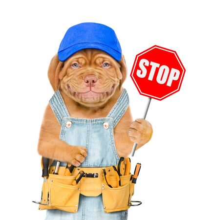 Photo for Smiling puppy in overalls and blue cap with tool belt showing stop sign. Isolated on white background. - Royalty Free Image