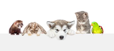 Photo pour Large group of pets  over empty white banner. isolated on white background. Empty space for text. - image libre de droit