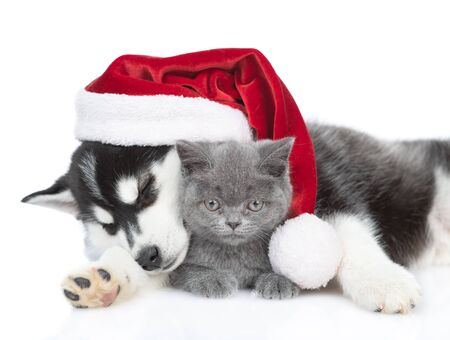 Photo pour Sleepy Siberian Husky puppy in red santa hat hugging british kitten. isolated on white background. - image libre de droit