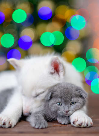 Photo pour White husky puppy sleeps and hugs gray kitten on a background of the Christmas tree. - image libre de droit