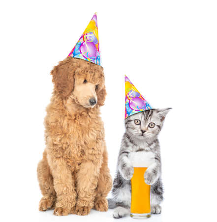 Photo pour Cat and dog wearing party hats. Poodle dog looks at kitten who holds glass of the beer. isolated on white background. - image libre de droit