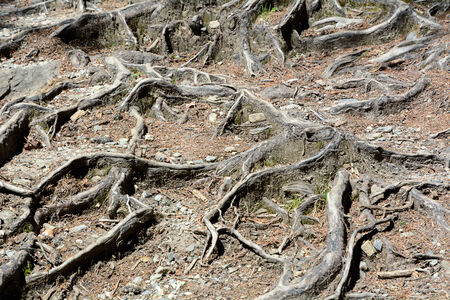 Roots texture