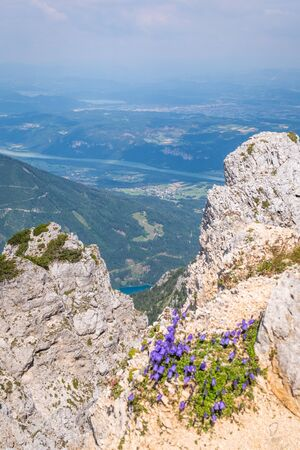View from mountain Hochobir with some blue flowers to valley Rosental with lake Freibach Stausee in Carinthia, Austria