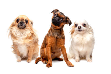 Photo for group of different breed dogs sitting in a row - Royalty Free Image