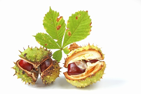 Horse chestnuts  Aesculus hippocastanum  with a leaf, isolated before white background