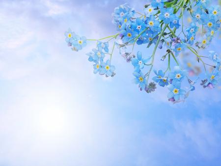 Foto de Blue forget-me-not or myosotis flowers bunch in the corner   - Imagen libre de derechos