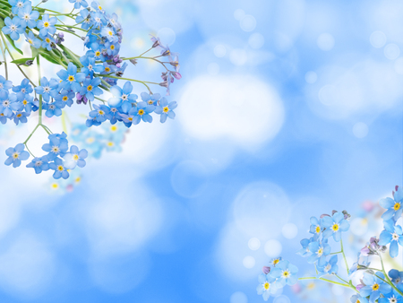 Photo pour Blue forget-me-not or myosotis flowers in the corners of the blurred bokeh background  - image libre de droit