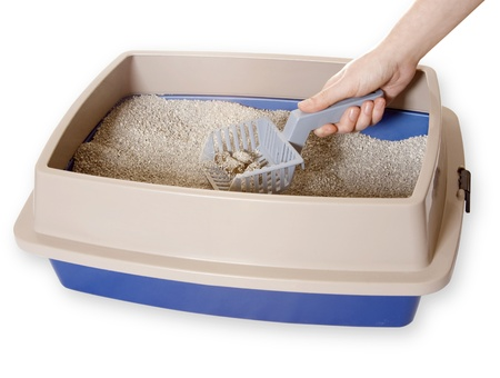 Cleaning Out Litterbox