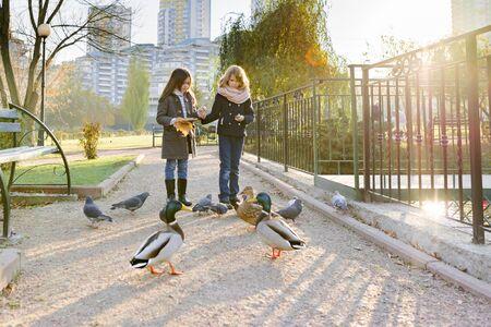 Foto de Two little girls feed birds ducks and pigeons in sunny autumn park, golden hour - Imagen libre de derechos