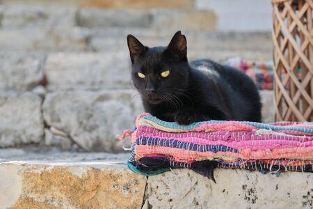 Photo pour Beautiful adult black male cat lying on a colored rug, outdoor - image libre de droit