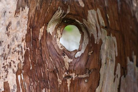 hollow tree trunk with a hole
