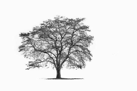 Foto per a winter tree isolated on white backgroud - Immagine Royalty Free