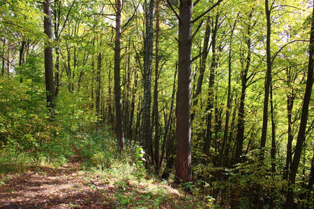 Photo pour A picturesque slope of a large ravine overgrown with trees in a forest area - image libre de droit