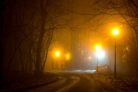 Photo for A road in the woodland during a thick fog at night - Royalty Free Image