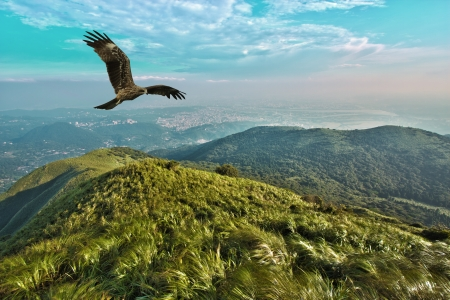 Black kite free flight in blue cloudy sky above mountains,Milvus migrans