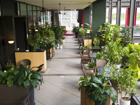 corridor with plants and funitures in the modern city mall building