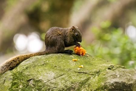 close view of a cute squirrel