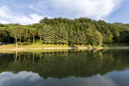 Foto per Reflections of trees on the lake - Immagine Royalty Free