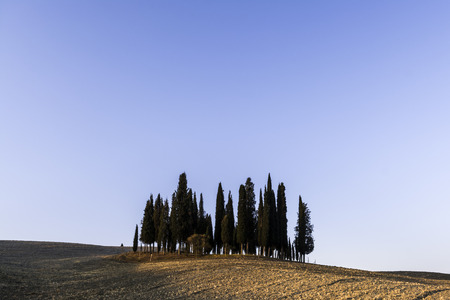 Cypress trees at sunrise in San Quirico