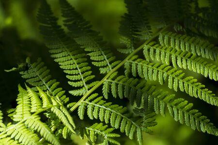 Foto per Green fern leaves create patterns - Immagine Royalty Free