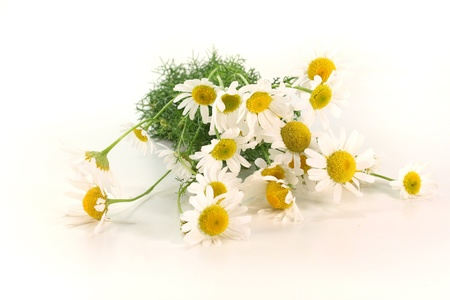 a bouquet of fresh chamomile flowers on a white background