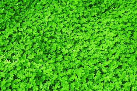 Green fresh clover field background, St.Patrick's day holiday symbol seamless green grass pattern