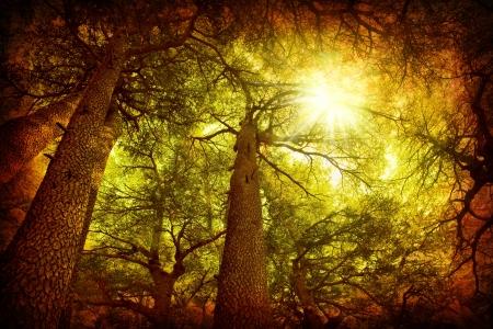 Cedar tree forest rare Lebanese kind grungy style photo