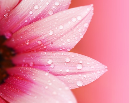 Pink flower petals, ?macro on flower, beautiful abstract background