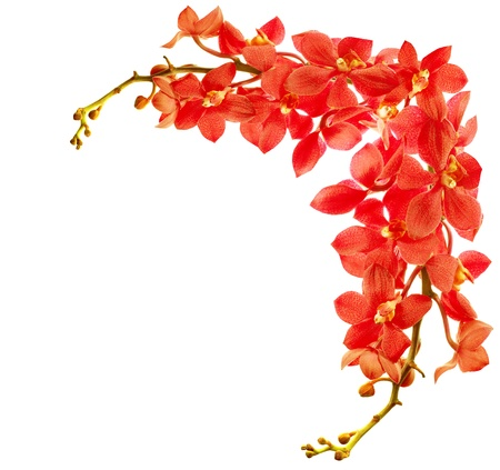 Photo pour Red fresh orchid flower border isolated on white background - image libre de droit