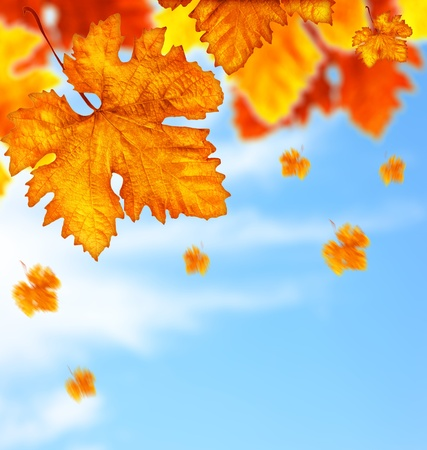 Photo pour Beautiful autumn tree border with falling down old leaves over blue cloudy sky, abstract background, nature at fall - image libre de droit