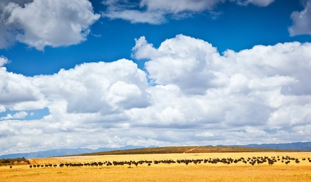 South African ostrich, farm of birds, beautiful natural landscape with animals, eco tourism, adventure travel, wildlife safari