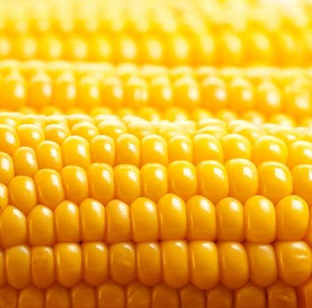 Foto für Image of yellow corn background, healthy organic food, bio nutrition, fresh ripe vegetable, maize cob, golden textured wallpaper, autumn harvest season, vegetarian eating and diet concept - Lizenzfreies Bild
