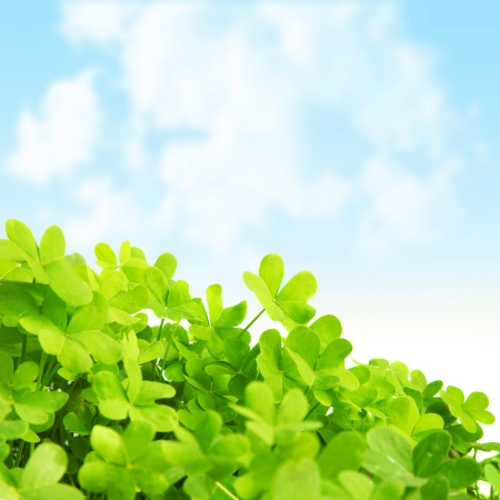 Picture of green clover field, st.Patrick's day background