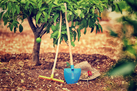 Photo pour Work in the garden, necessary tools for work in the soil, rake, shovel and hat under lemon tree, fruits cultivation, productionof a  healthy organic nutrition - image libre de droit