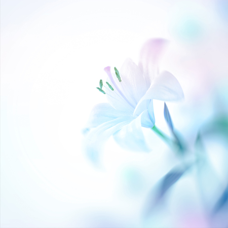 Photo for Closeup photo of a beautiful gentle white lily flower, nice floral background with copy space, elegant invitation for a wedding day - Royalty Free Image