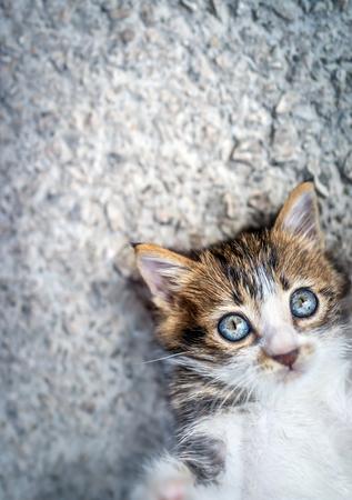 Foto de Portrait of an adorable little cat lying down on an asphalt background, with pleasure spending time outdoors, sweet pet playing - Imagen libre de derechos