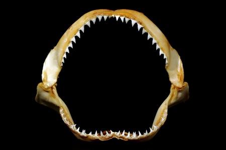 shark jaws with sharp teeth