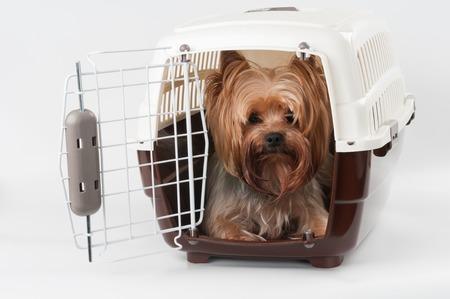 Foto de Opened pet travel plastic carrier with Yorkshire Terrier inside - Imagen libre de derechos