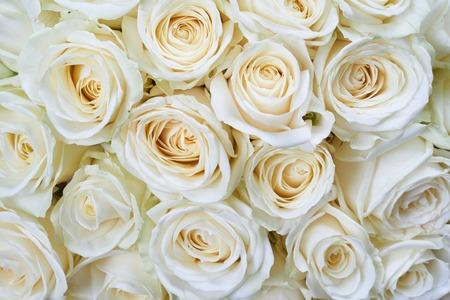 Foto de Many white roses as a floral background - Imagen libre de derechos