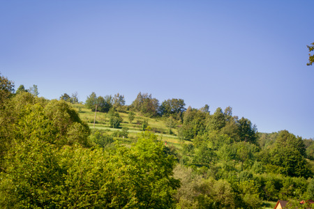 Green trees and bushes growing on a hill and blue sky in the background