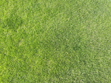 Photo pour Natural grass texture pattern background golf course turf from top view with authentic grassy lawn for environmental backdrop in yellow green - image libre de droit