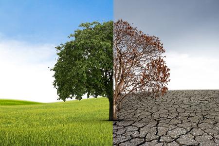 Foto de The concept of climate has changed. Half alive and half dead tree standing at the crossroads. Save the environment. - Imagen libre de derechos