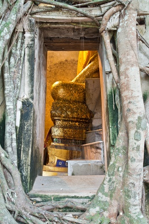 Ancient Buddhist church surrounded by tree roots in Thailand,Asi