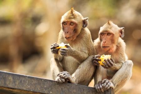 monkey asia thailand