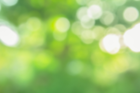 Photo for green nature bokeh background blurred - Royalty Free Image