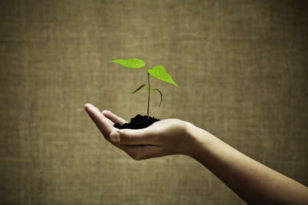 Photo pour Female hand holding a new green life - image libre de droit